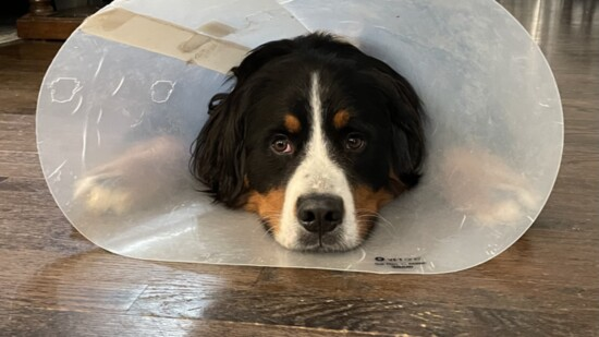 Sometimes We All Need to Wear a Cone