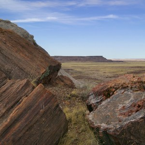 petrified%20forest%20view-300?v=1