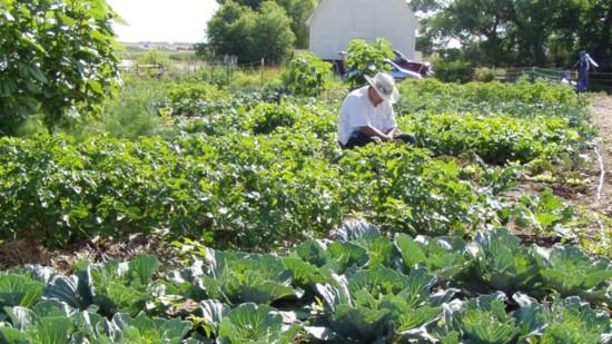 Sustaining Development & Environmental Stewardship