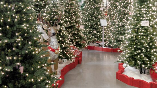 The Best Christmas Display in the Country: Needed Now More Than Ever
