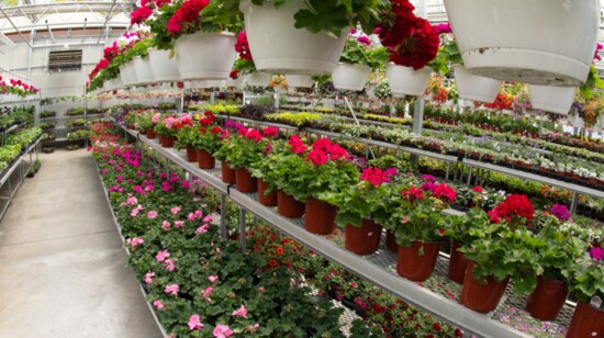 The Fruits, Vegetables and Flowers of Summer Have Arrived