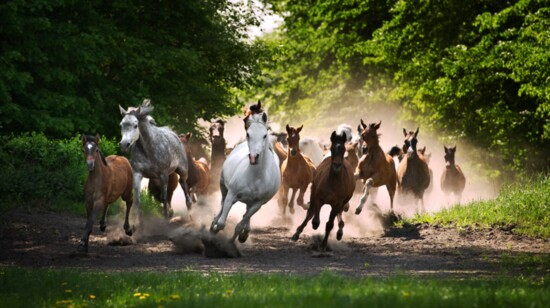 The Journey of a Horse Photographer