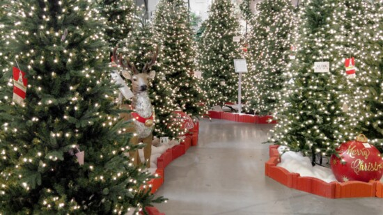 The Magic of Christmas Is Here: