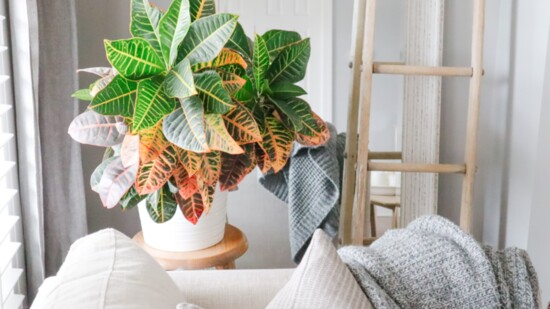 The (Painted) Green Thumb