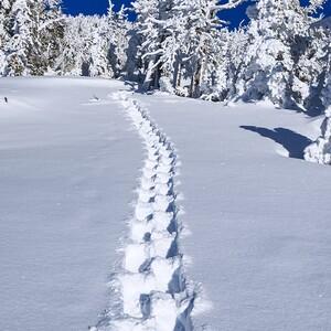 snowshoe_tracks_1810301lsnd800_72ppi-300?v=1