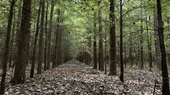 Trees: Nature's Technology to Tackle Climate Change