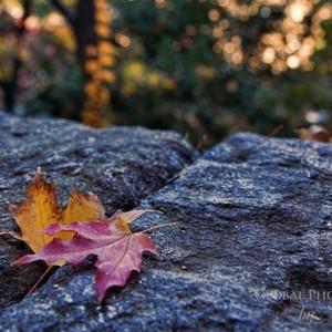 fall-colors-9-d-300?v=1