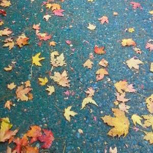 fall-colors-9-f-300?v=1