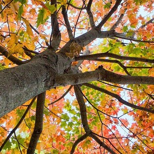 fall-colors-header-300?v=1