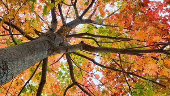 fall-colors-header-550?v=1
