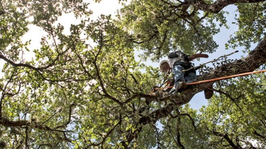 Urban Tree is More Than Just a Tree Service