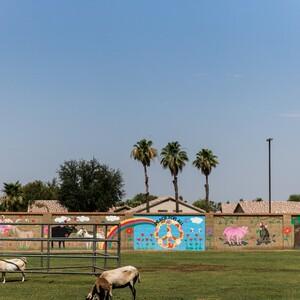 lindsay-borg-photography-arizona-20%2014-300?v=1