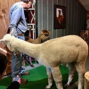 yayas-alpaca-farm-5-300?v=1