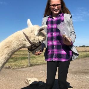 yayas-alpaca-farm-6-300?v=1