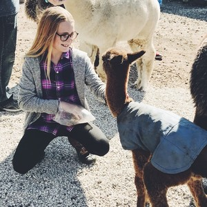 yayas-alpaca-farm-7-300?v=1