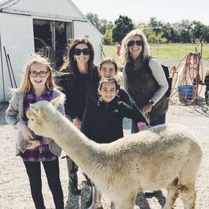 yayas-alpaca-farm-8-300?v=1